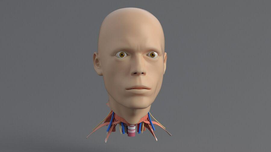 人間の頭の解剖学 royalty-free 3d model - Preview no. 4