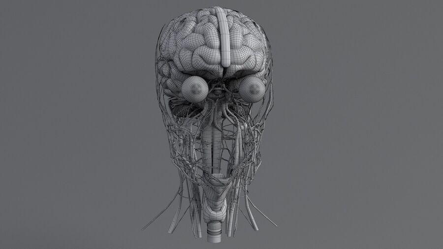 人間の頭の解剖学 royalty-free 3d model - Preview no. 59