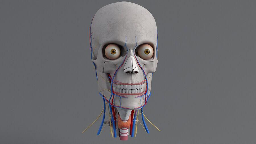 人間の頭の解剖学 royalty-free 3d model - Preview no. 15