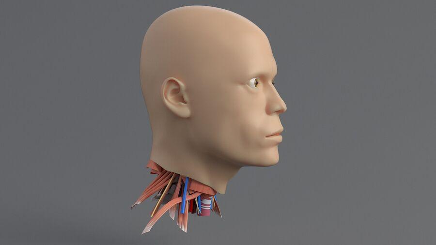 人間の頭の解剖学 royalty-free 3d model - Preview no. 5