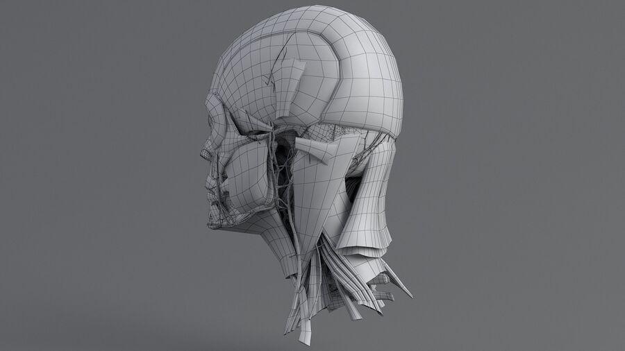 人間の頭の解剖学 royalty-free 3d model - Preview no. 49