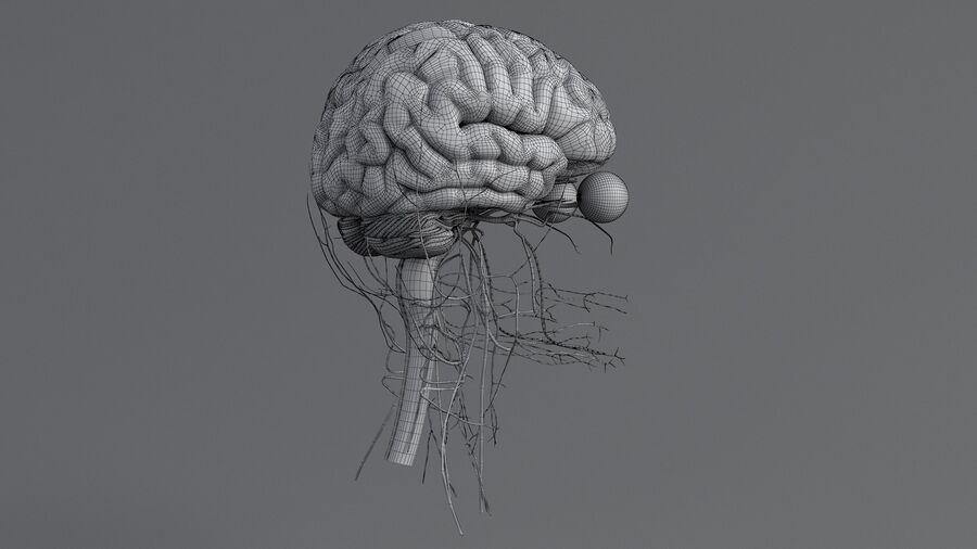 人間の頭の解剖学 royalty-free 3d model - Preview no. 67