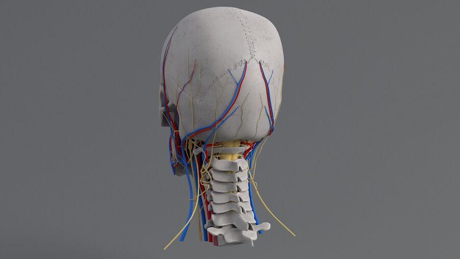 人間の頭の解剖学 royalty-free 3d model - Preview no. 18