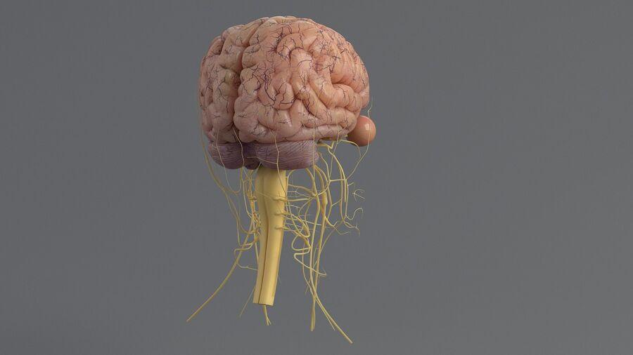 人間の頭の解剖学 royalty-free 3d model - Preview no. 31