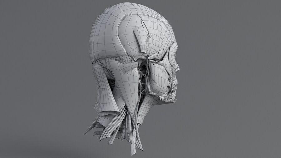 人間の頭の解剖学 royalty-free 3d model - Preview no. 47