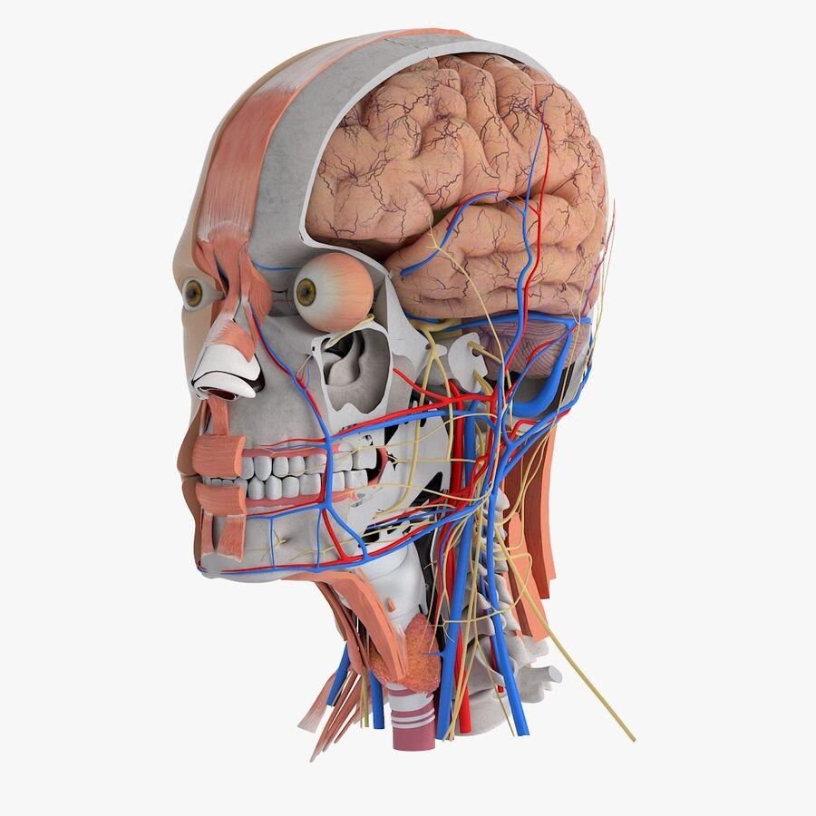 人間の頭の解剖学 royalty-free 3d model - Preview no. 1