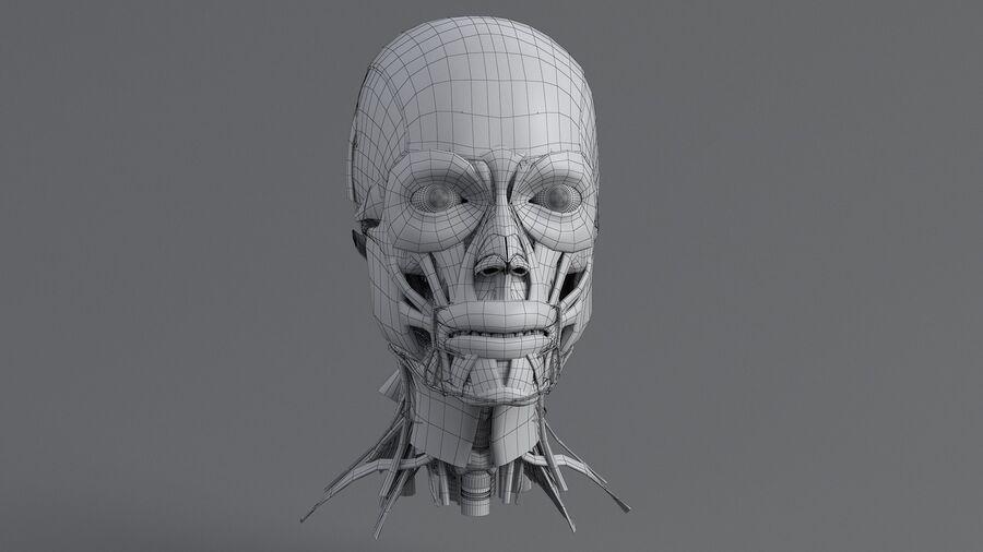 人間の頭の解剖学 royalty-free 3d model - Preview no. 45