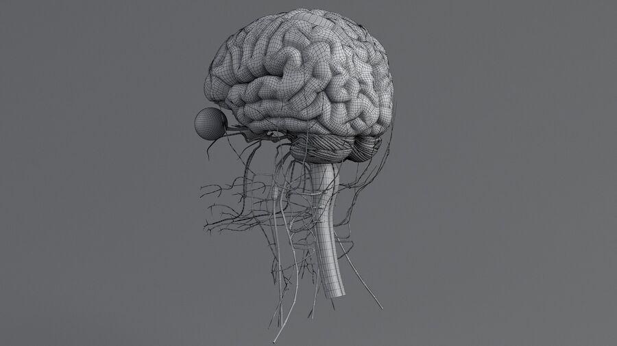 人間の頭の解剖学 royalty-free 3d model - Preview no. 69