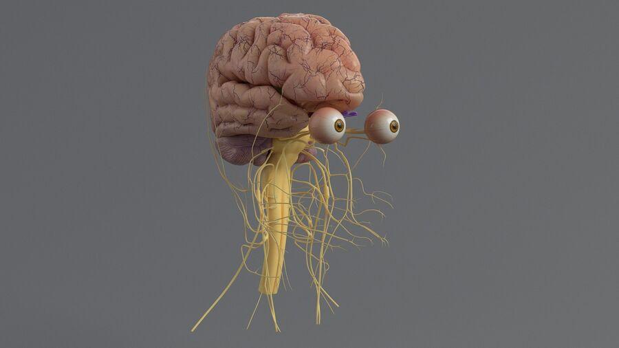 人間の頭の解剖学 royalty-free 3d model - Preview no. 35
