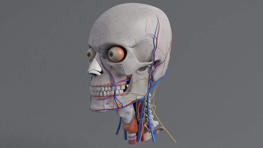 人間の頭の解剖学 royalty-free 3d model - Preview no. 14