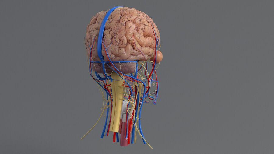 人間の頭の解剖学 royalty-free 3d model - Preview no. 25