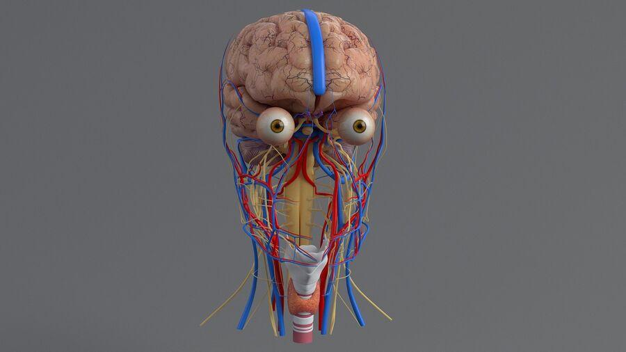 人間の頭の解剖学 royalty-free 3d model - Preview no. 22