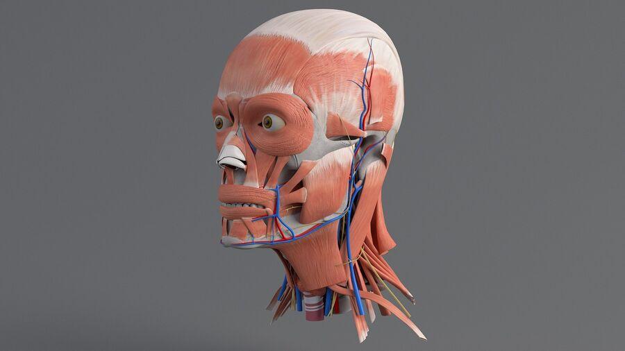 人間の頭の解剖学 royalty-free 3d model - Preview no. 2