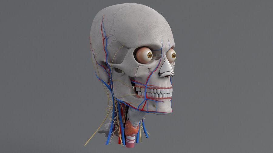 人間の頭の解剖学 royalty-free 3d model - Preview no. 16