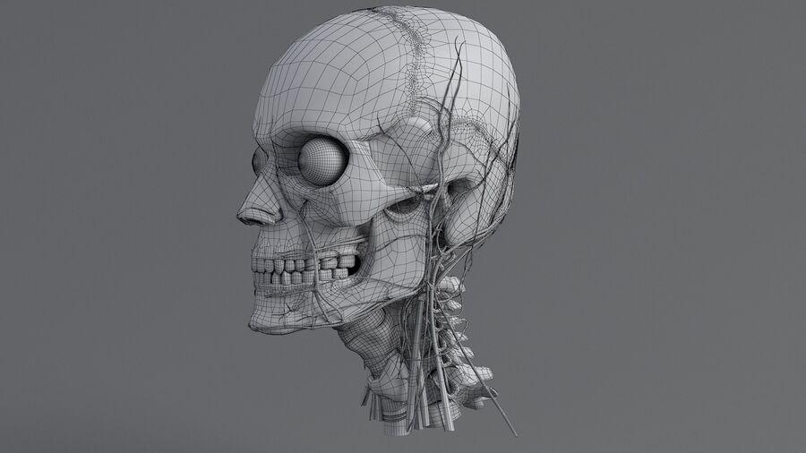 人間の頭の解剖学 royalty-free 3d model - Preview no. 57