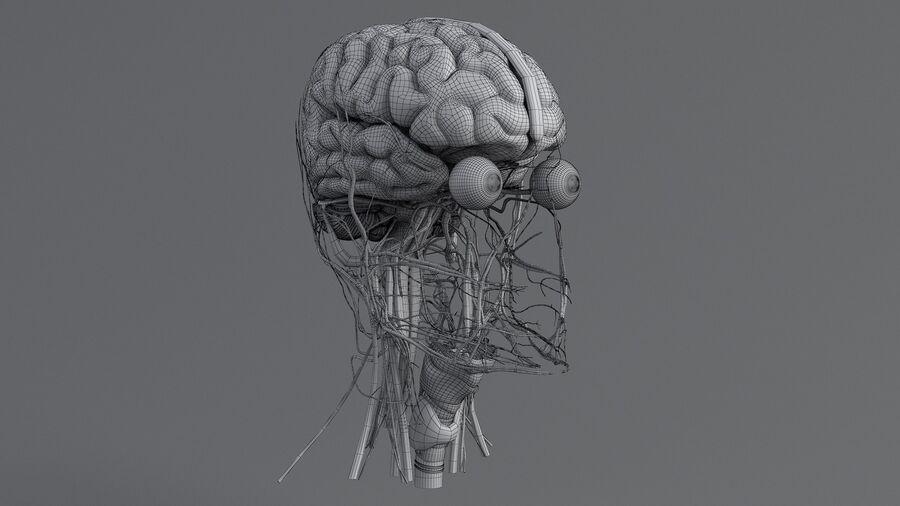 人間の頭の解剖学 royalty-free 3d model - Preview no. 60