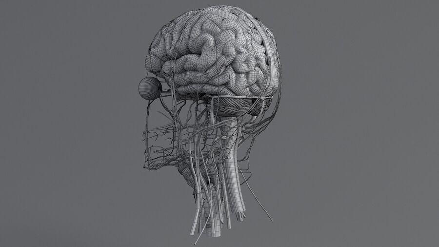 人間の頭の解剖学 royalty-free 3d model - Preview no. 63
