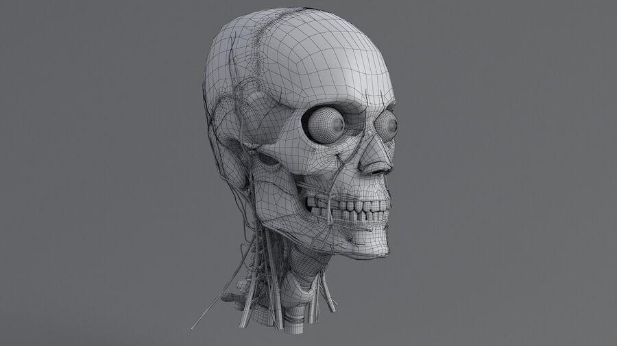 人間の頭の解剖学 royalty-free 3d model - Preview no. 53