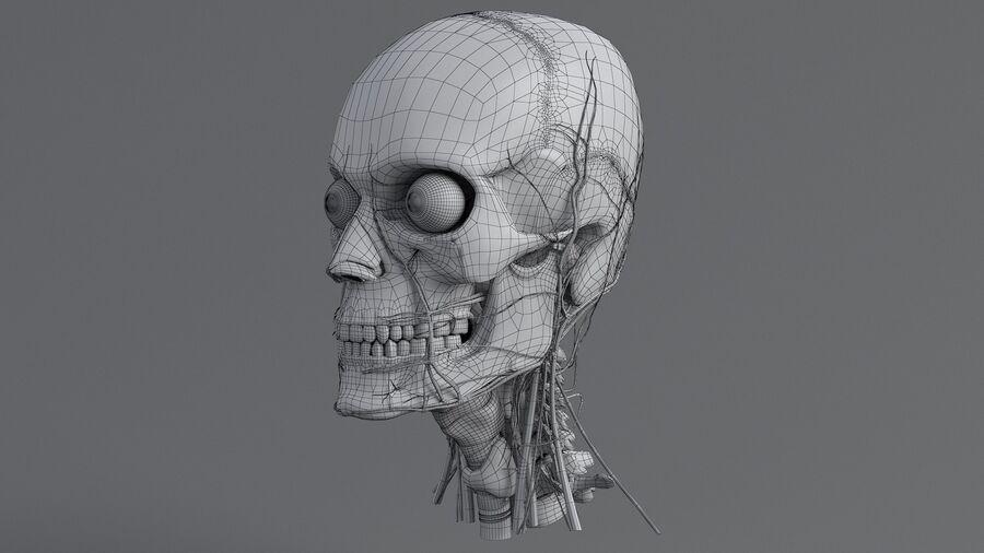 人間の頭の解剖学 royalty-free 3d model - Preview no. 51