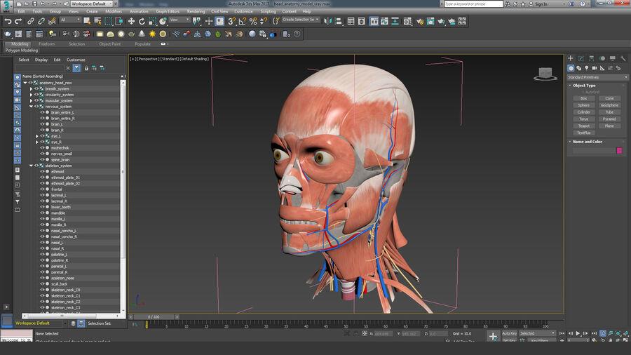 人間の頭の解剖学 royalty-free 3d model - Preview no. 76