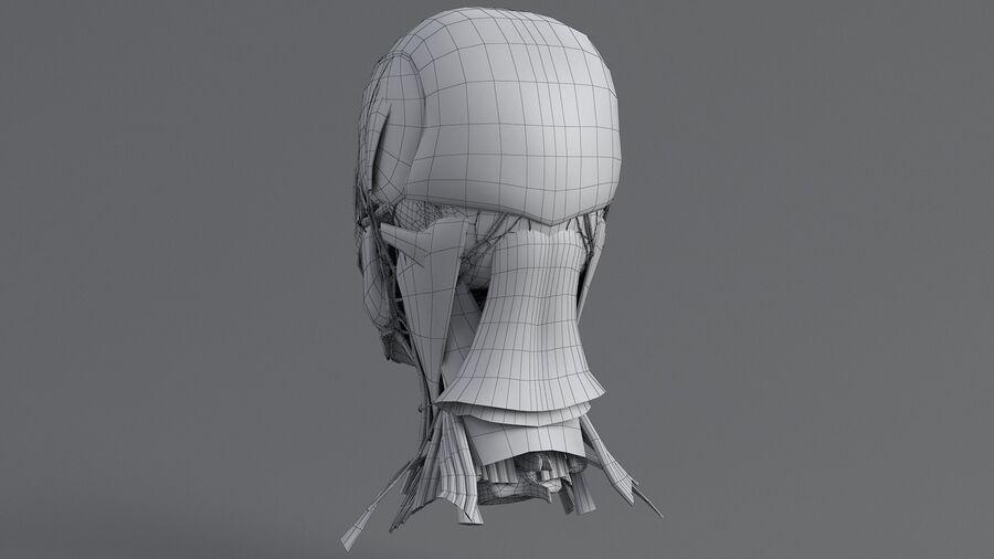 人間の頭の解剖学 royalty-free 3d model - Preview no. 48