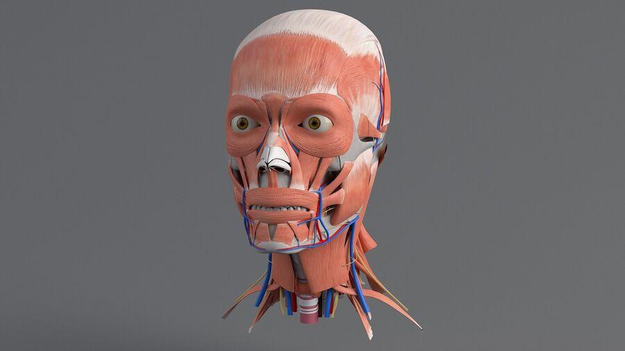 人間の頭の解剖学 royalty-free 3d model - Preview no. 8