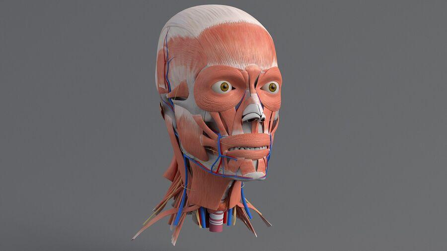 人間の頭の解剖学 royalty-free 3d model - Preview no. 9