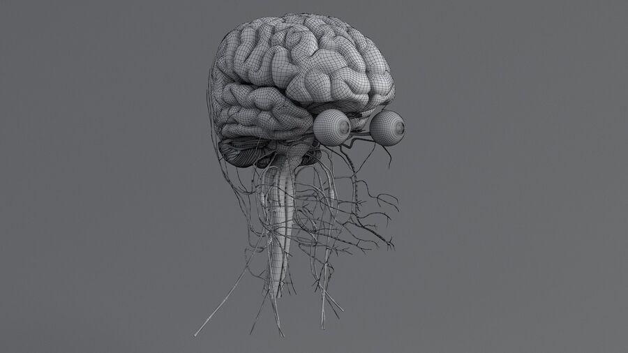 人間の頭の解剖学 royalty-free 3d model - Preview no. 66