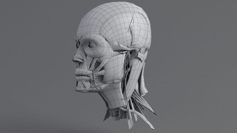 人間の頭の解剖学 royalty-free 3d model - Preview no. 50