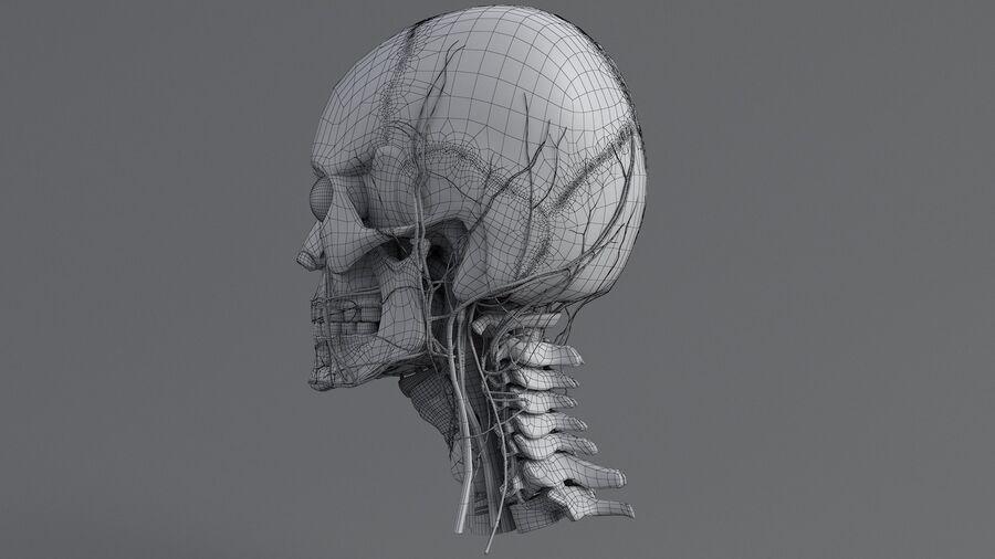 人間の頭の解剖学 royalty-free 3d model - Preview no. 56