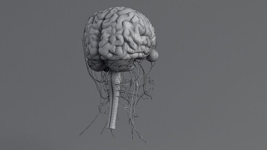 人間の頭の解剖学 royalty-free 3d model - Preview no. 68