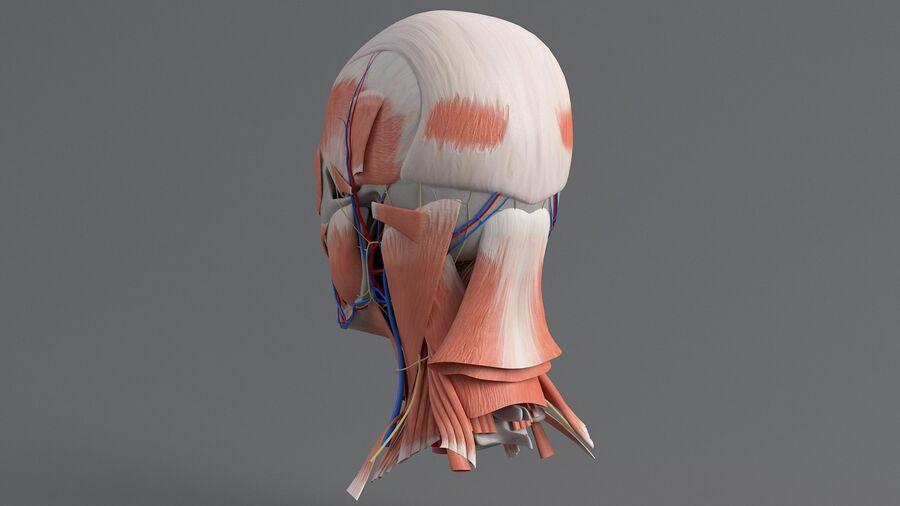 人間の頭の解剖学 royalty-free 3d model - Preview no. 11