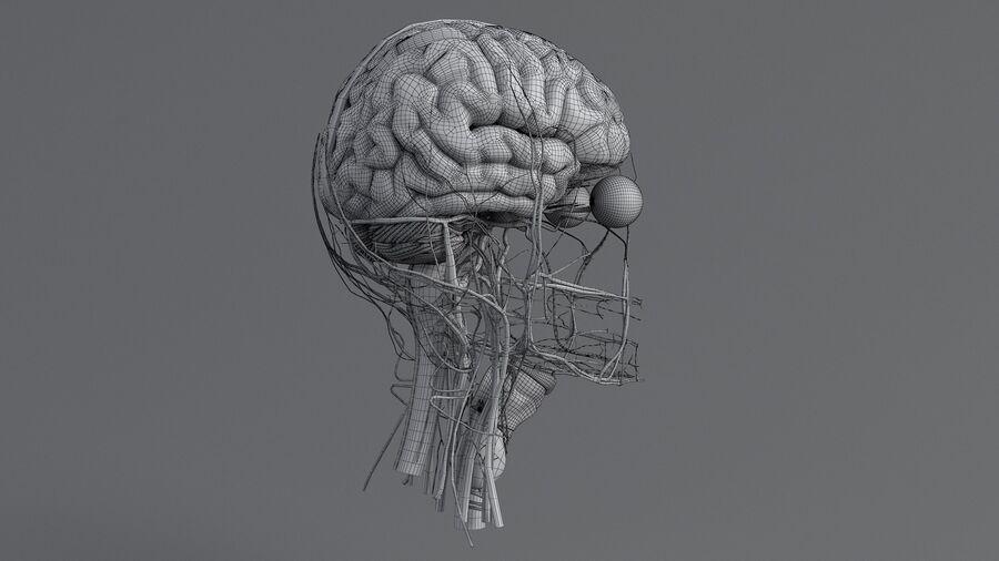 人間の頭の解剖学 royalty-free 3d model - Preview no. 61