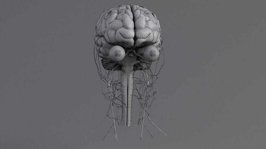 人間の頭の解剖学 royalty-free 3d model - Preview no. 65