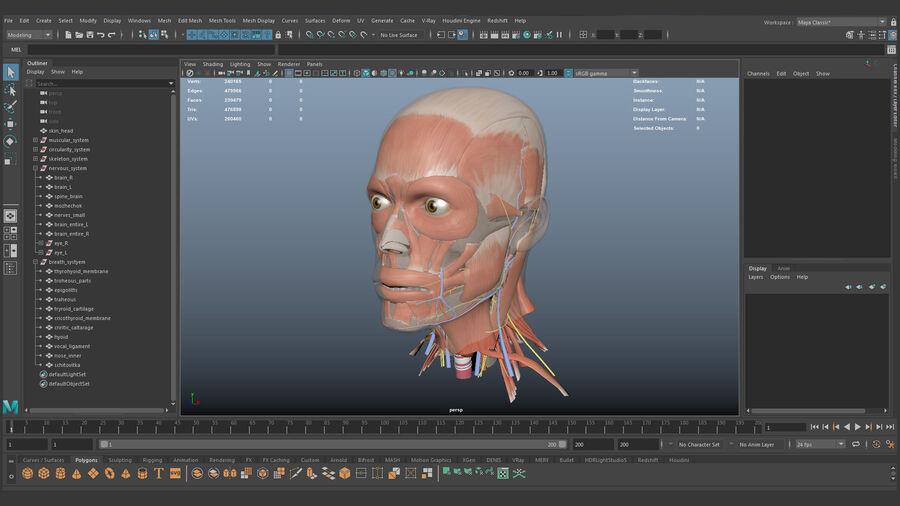 人間の頭の解剖学 royalty-free 3d model - Preview no. 77