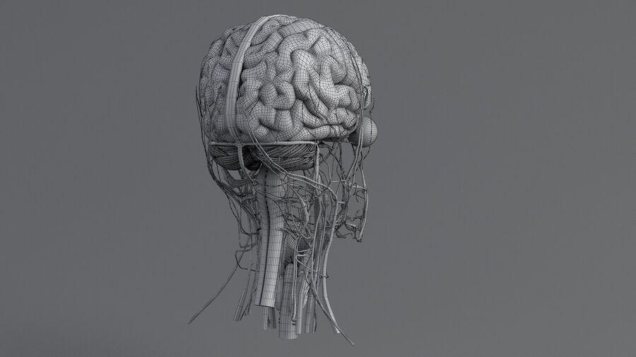 人間の頭の解剖学 royalty-free 3d model - Preview no. 62