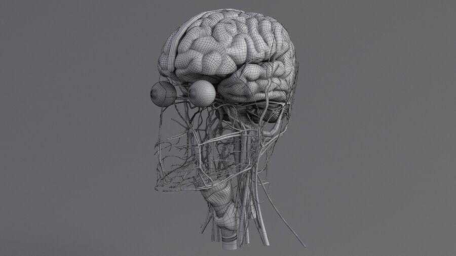 人間の頭の解剖学 royalty-free 3d model - Preview no. 58
