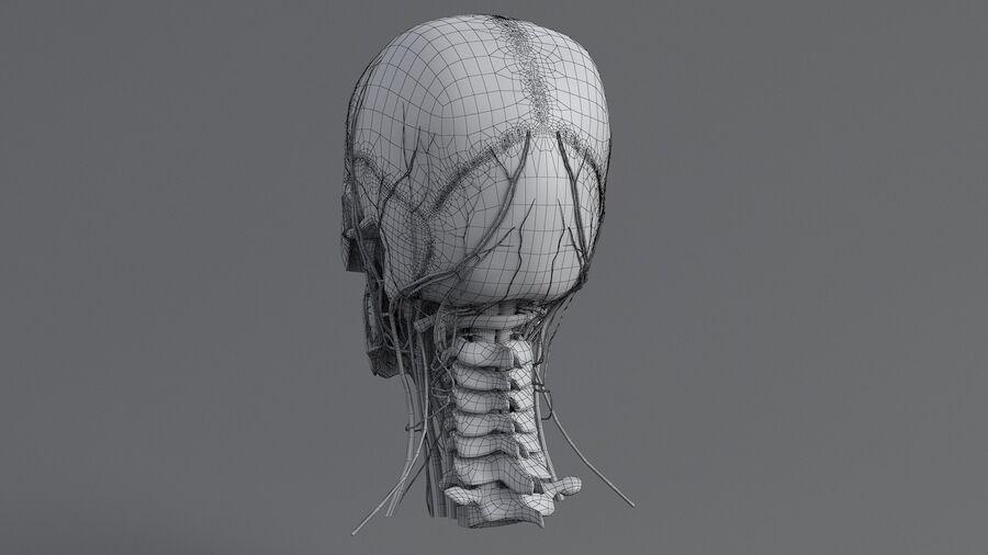 人間の頭の解剖学 royalty-free 3d model - Preview no. 55