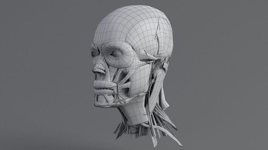人間の頭の解剖学 royalty-free 3d model - Preview no. 44