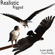 Realistiska Rigged Low Poly 2 Falcon-versioner 3d model