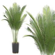 Plante en pot 70 3d model