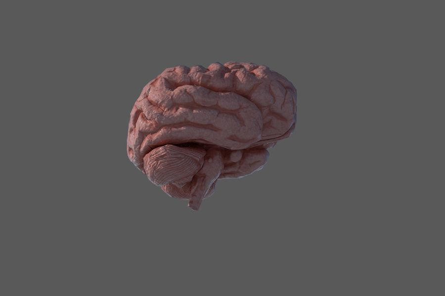 Low Poly Human Brain Anatomy PBR royalty-free 3d model - Preview no. 3