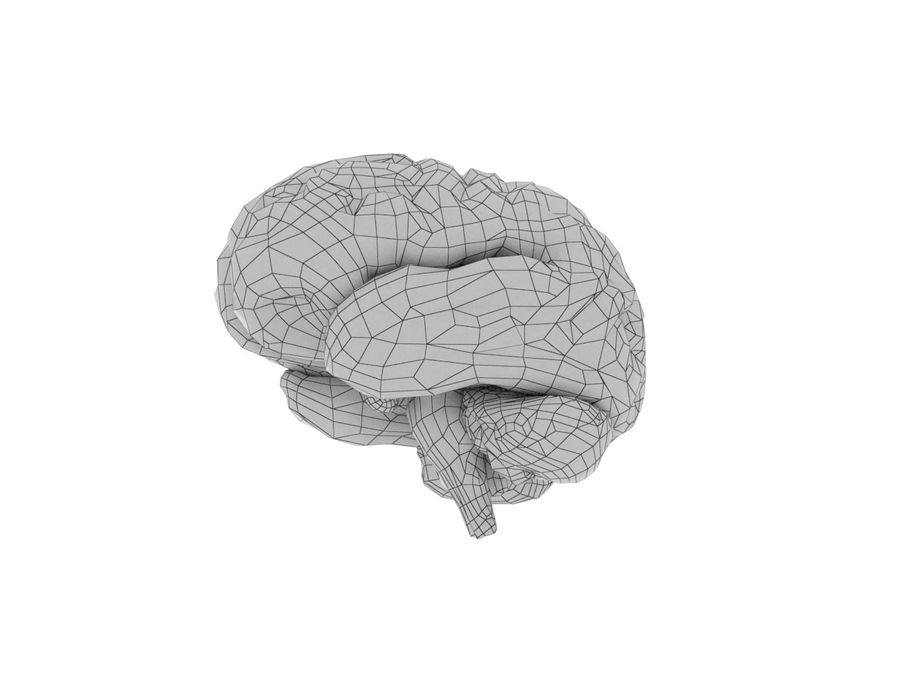 Low Poly Human Brain Anatomy PBR royalty-free 3d model - Preview no. 7
