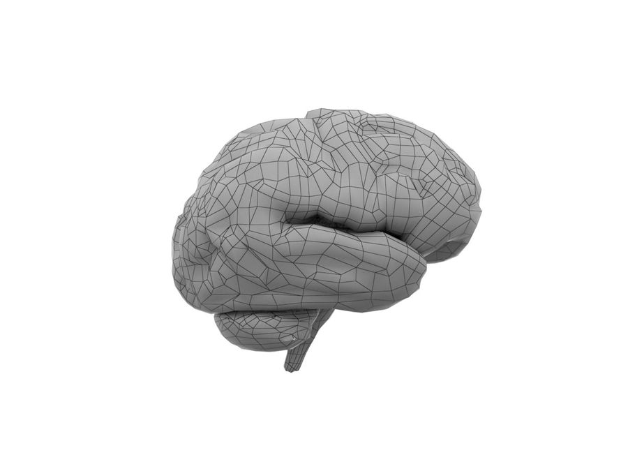 Low Poly Human Brain Anatomy PBR royalty-free 3d model - Preview no. 6
