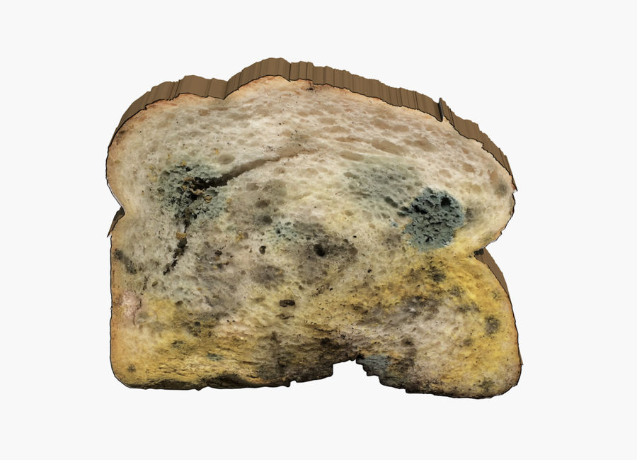 moldy bread royalty-free 3d model - Preview no. 2
