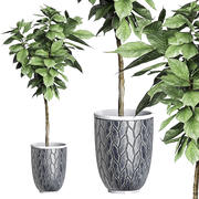 Plante en pot 82 3d model