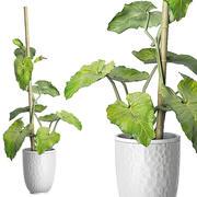 Plante en pot 83 3d model