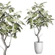 Горшечное растение 84 3d model