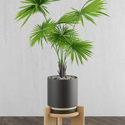 Home plat on wood stand 3d model