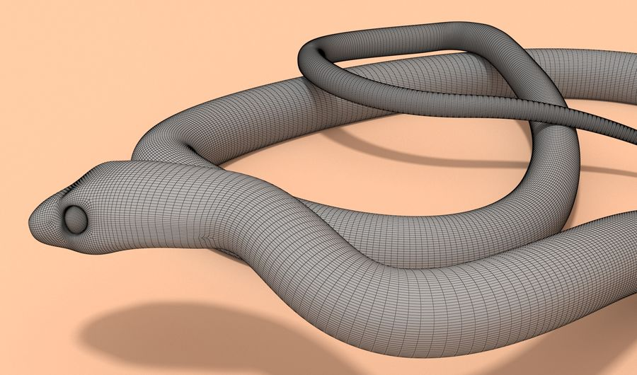Scarlet King snake royalty-free 3d model - Preview no. 15